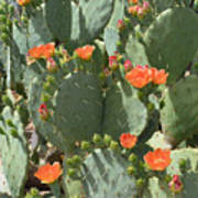 Orange Blossom Cactus  Art Print