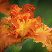 Orange Burst Art Print