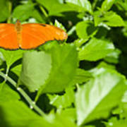 Orange Butterfly On Foliage Art Print