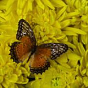Orange Butterfly On Yellow Mums Art Print