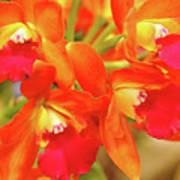 Orange Cattleya Orchid Art Print