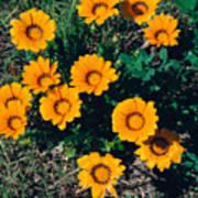 Orange Daisies--film Image Art Print