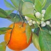 Orange en Bouton Art Print