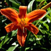 Orange Flower Of Summer Art Print