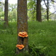 Orange Fungi On A Tree Art Print
