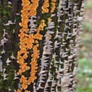 Orange Fungus Art Print