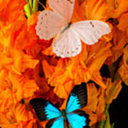 Orange Glads With Two Butterflies Art Print