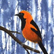 Orange-headed Oriole Art Print