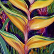 Orange Heliconia Art Print