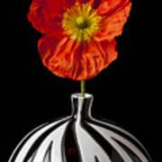 Orange Iceland Poppy Art Print