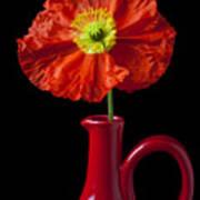 Orange Iceland Poppy In Red Pitcher Art Print