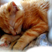 Orange Kitten Sleeping In Silk And Satin Art Print