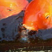 Orange Kiss Art Print
