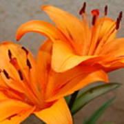 Orange Lilies 2 Art Print