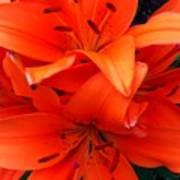 Orange Lily Closeup Digital Painting Art Print