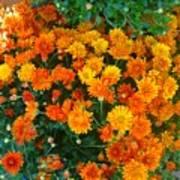 Orange Margarita Daisy Art Print
