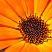 Orange Petal Art Print