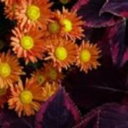 Orange Petals And Purple Leaves Art Print