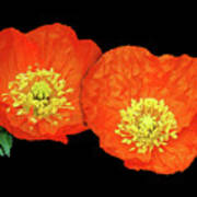 Orange Poppy Collage Cutout Art Print
