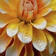 Orange Rain Art Print