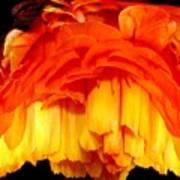 Orange Ranunculus Polar Coordinate Art Print