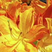 Orange Rhodies Flowers Art Rhododendron Baslee Troutman Art Print