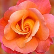 Orange Rosebud Highlight Art Print