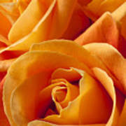 Orange Roses Art Print by Garry Gay