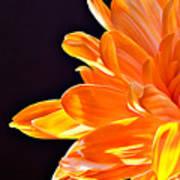 Orange Sherbet Art Print