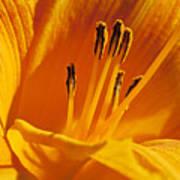 Orange Stamens Art Print