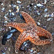 Orange Starfish Art Print