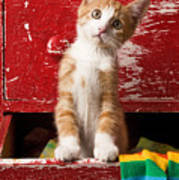 Orange Tabby Kitten In Red Drawer  Art Print
