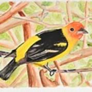 Orange Tanager Art Print