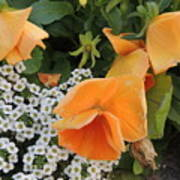 Orange Teardrop With White Lace Art Print