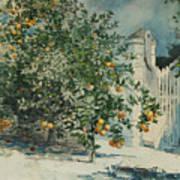 Orange Trees And Gate Art Print
