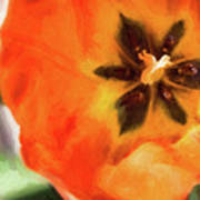Orange Tulip Bloom Art Print