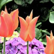 Orange Tulip Painting  Art Print