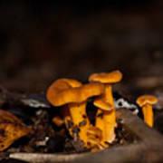 Orange Woodland Mushrooms Art Print