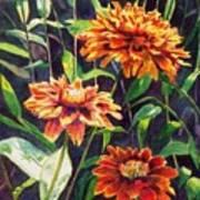 Orange Zinnias Art Print