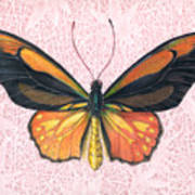 Oranged Birdwing Art Print