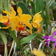 Orangepurple Orchids Art Print