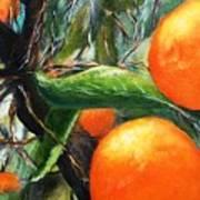 Oranges Extract Art Print