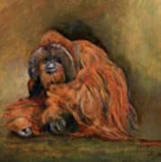 Orangutan Monkey Art Print