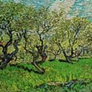 Orchard In Blossom Art Print