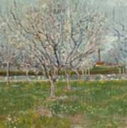 Orchard In Blossom Plum Trees Art Print