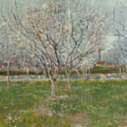 Orchard In Blossom, Plum Trees Art Print