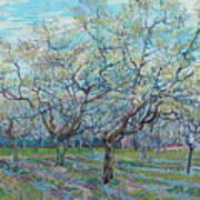 Orchard With Blossoming Plum Trees   Art Print