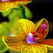 Orchid-0022 Art Print