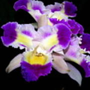 Orchid 13 Art Print