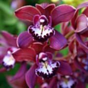 Orchid 20 Art Print